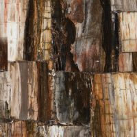 8331 Petrified Wood Classic